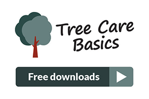 Tree Care Basics